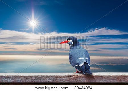 Inca Tern (larosterna Inca) Spotted Perch On Wood With Sky Background.