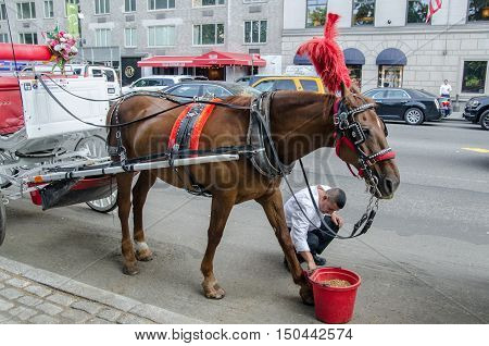 CENTRAL PARK NEW YORK USA - JUNE 10 2015: Brown horse and red bucket on Central Park South.