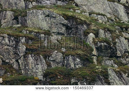 Surface of a rocks with green moss and lichen. Arctic Norway.