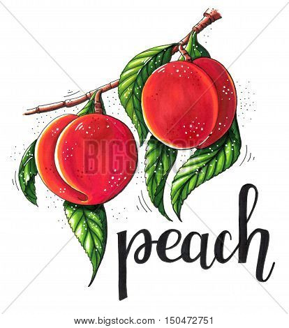 Hand drawn marker illustration of a branch of ripe peaches with green leaves isolated on white background. This image can be used as a print on t-shirts and bags greeting card or as a poster.