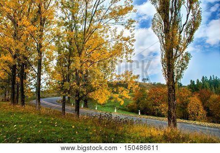 Autumn Landscape. Trees Along The Road And Forest With Blue Sky In Autumn Day.