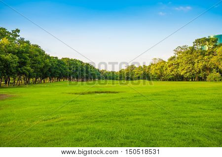 Green Grass Field With Tree In The City Park
