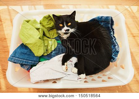 Lazy black and white cat lying between clean clothes in laundry basket.