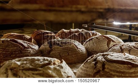 Fresh baked loaves of bread on a rack in a bakery