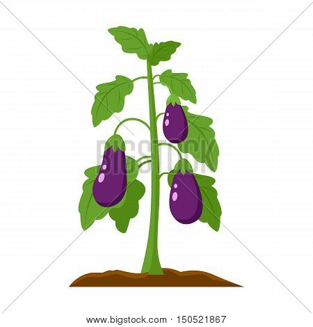 Eggplant icon cartoon. Single plant icon from the big farm, garden, agriculture collection.