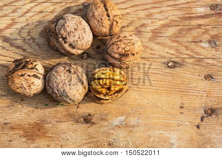 Whole walnuts and walnut kernels. New harvest, just cropped.