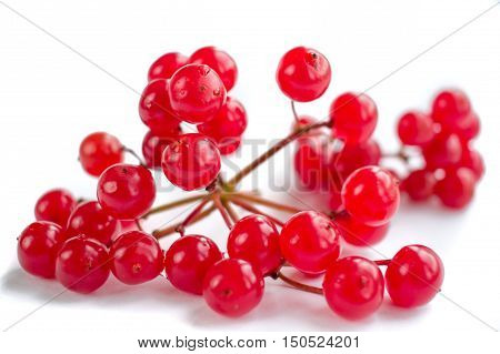 Cluster Of Red Berries Of Guelder Rose Isolated