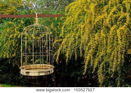 3D rendering of a golden bird cage on garden freedom concept