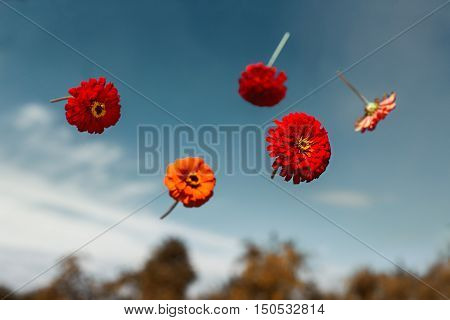 Red flowers thrown to the sky and soar in weightlessness