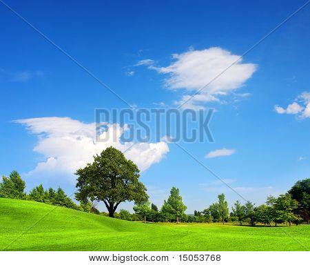Green Field, Springtime