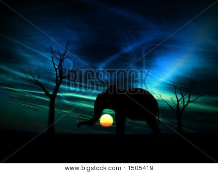 Elephant Sunrise 96