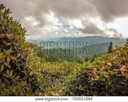 Scenes Along Appalachian Trail In Smoky Mountains North Carolina