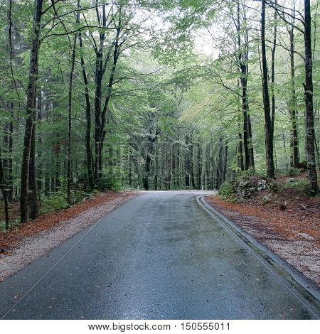 Road in forest.