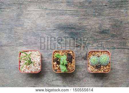 Closeup group of cactus in plastic white and brown pot on wood desk textured background in top view with copy space
