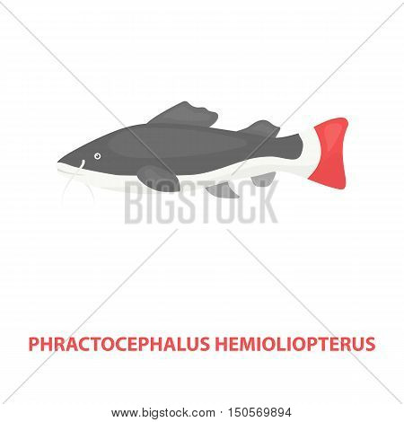 Phractocephalus hemioliopterus fish icon cartoon. Singe aquarium fish icon from the sea, ocean life cartoon.