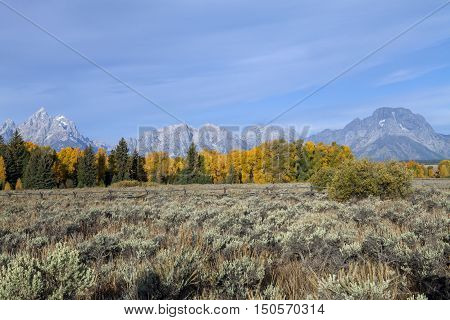 Fall color in the Grand Teton National Park