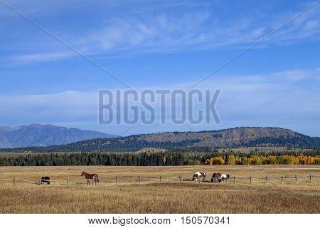 Horses grazing on the open plain in the Grand Teton National Park
