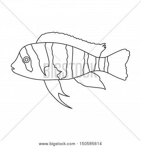 Frontosa Cichlid Cyphotilapia Frontosa fish icon line. Single aquarium fish icon from the sea