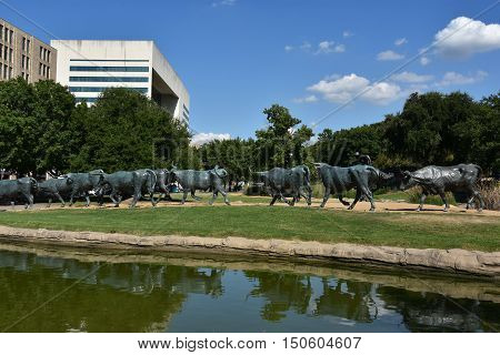 DALLAS, TX - SEP 17: The Cattle Drive Sculpture at Pioneer Plaza in Dallas, Texas, as seen on Sep 17, 2016. The 49 bronze steers and 3 trail riders sculptures were created by artist Robert Summers of Glen Rose, Texas.