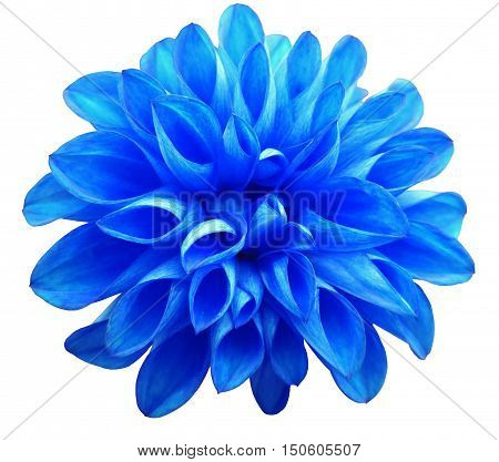 flower blue dahlia isolated on white background. It can be used in website design and printing. Suitable for designers. Closeup.
