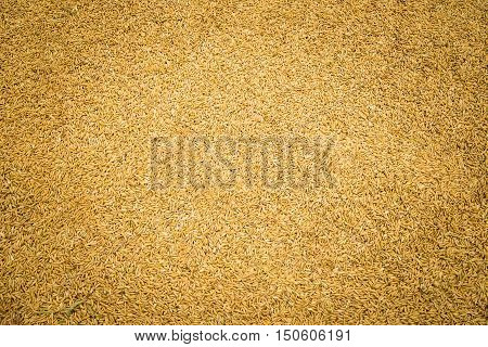 Wheat grains, Rice, pile of paddy, whole rice,