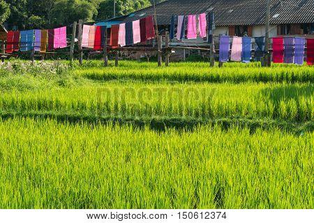 Rice farm with farmer's hut countryside of Thailand