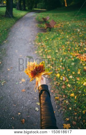 Female hand holding bunch of falling leaves against pathway in autumnal park. Selective focus wide angle lens