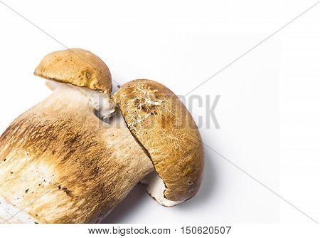 big mushroom cep isolated on white background