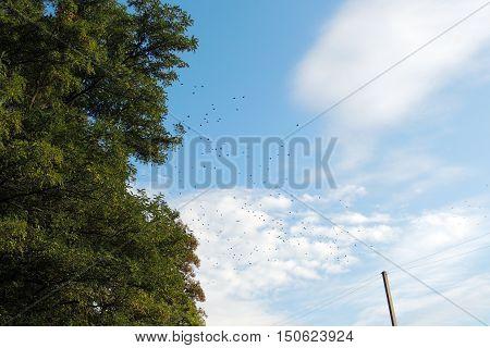 Flock Of Birds In The Sky