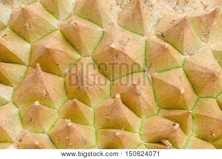 Rough texture of durian skin with thorns.