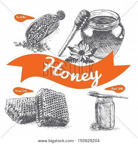 Royal jelly bee pollen honey comb and honey illustration. Vector illustration of honey