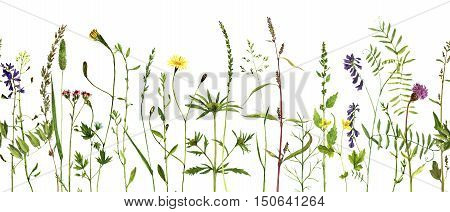 Watercolor drawing wild flowers and herbs, seamless decorative herbal border, pattern with painted wild plants, botanical illustration in vintage style, floral background, hand drawn natural template