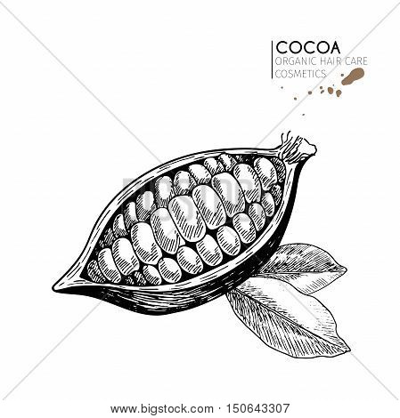 Vector set of hair care ingredients. Organic hand drawn elements. Cocoa bean and leaves. Use for cosmetic package shop store products spa salon wellnes program procedure skin hair care.