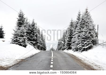 Road going through a frost covered woods