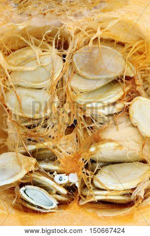 Detail of the cut pumpkin - pumpkin seeds