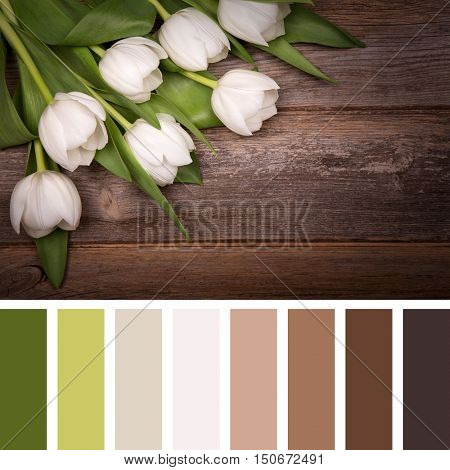 White tulips over old wood background. In a colour palette with complimentary colour swatches.