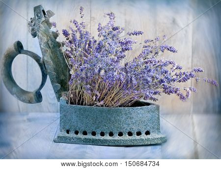Dry - dried lavender flower in rustic iron (old iron) on wooden table