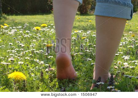 Walking Over The Meadow