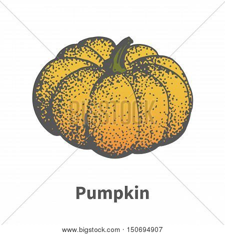 Vector illustration doodle sketch hand-drawn ripe yellow pumpkin. Isolated on white background. The concept of harvesting. Vintage retro style.