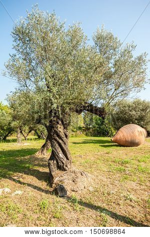 Olive trees and large earthen jar for oil.