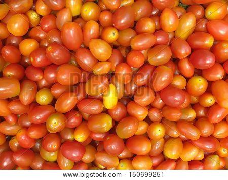 Close Up Mini Tomato