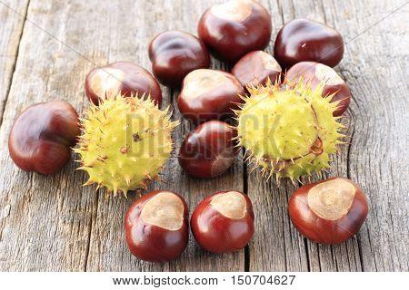 chestnuts - fruits horse chestnut - Aesculus hippocastanum