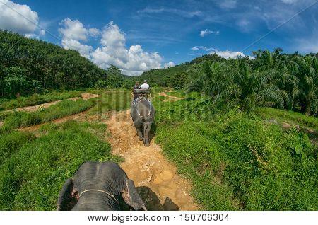 Picturesque Elephant Safari during Thai Vacation