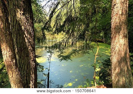 Fantastic landscape summer forest with a pond.