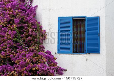 Window with blue sun blinds and plant blooming with pink flowers on white wall in Budva, Montenegro.