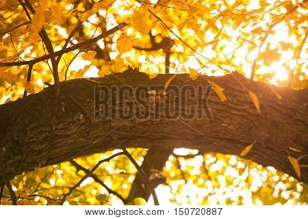 Autumnal Branches In Sun.