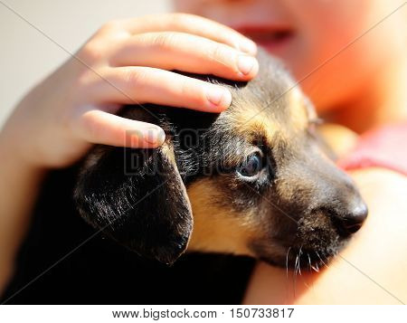 Cute puppy young dog pet with brown coat in hands of little girl outdoors on sunny day