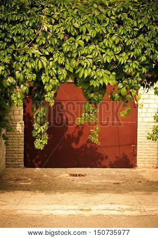 Green grape leaves above old garage door as frame, vintage style, toned