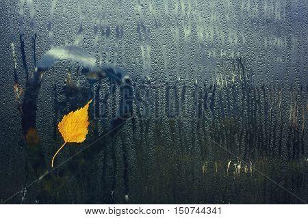 autumn birch tree leaf on wet window rain cold weather