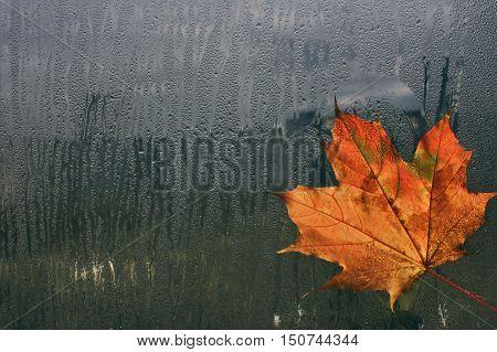 autumn maple leaf on wet window rain cold weather